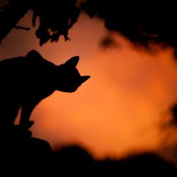 silhouette de chat noir contre un coucher de soleil orange